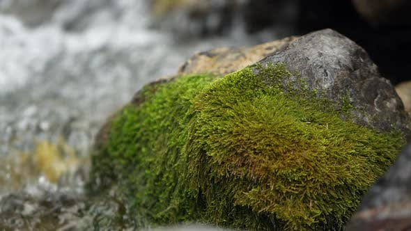 Green mossy rock on the side of a small stream.