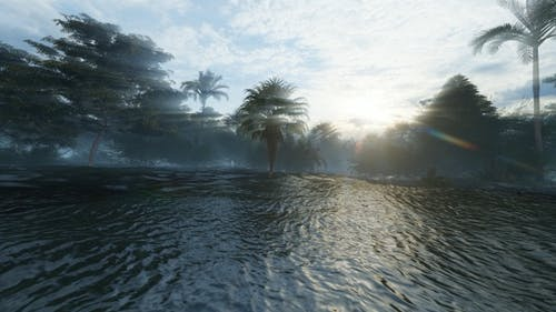Flooded Rainforest 1