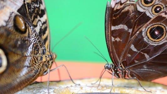 Thumbnail for Butterflies 20