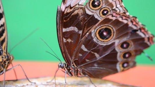 Thumbnail for Butterflies 21