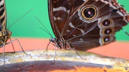 Thumbnail for Butterflies 22