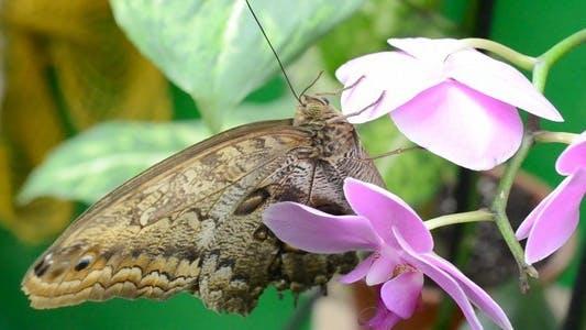 Thumbnail for Butterflies 29
