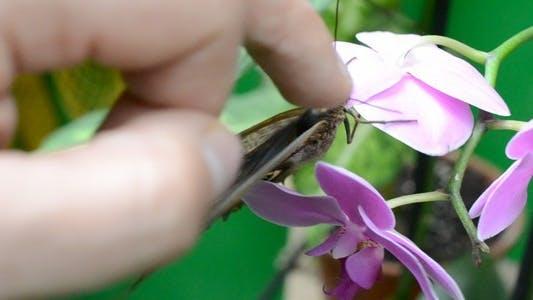 Thumbnail for Butterflies 30