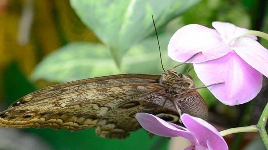 Thumbnail for Butterflies 31