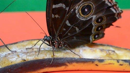 Thumbnail for Butterflies 34