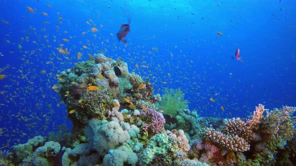 Cover Image for Colorful Reef Scene