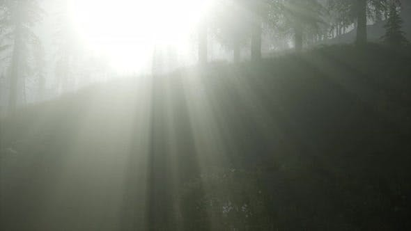 Thumbnail for Forest in Autumn Morning Mist