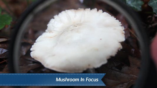 Thumbnail for Mushroom In Focus