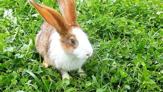 Thumbnail for Rabbit