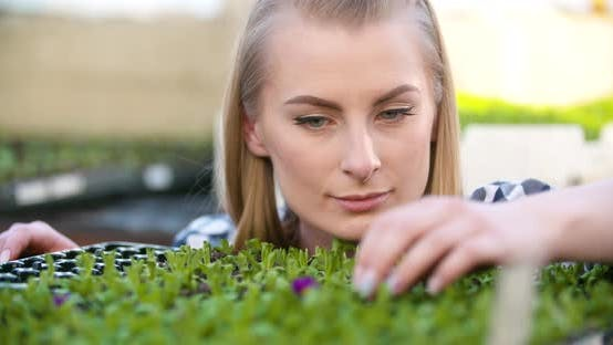 Thumbnail for Agriculture Farmer Researches Examining Flowers Seedlings at Greenhouse