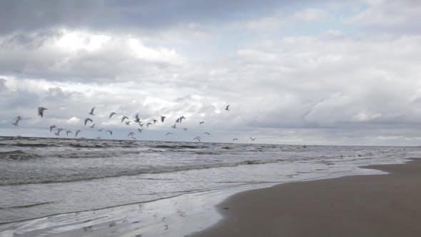 Thumbnail for Gulls Fly Above a Sea Coast
