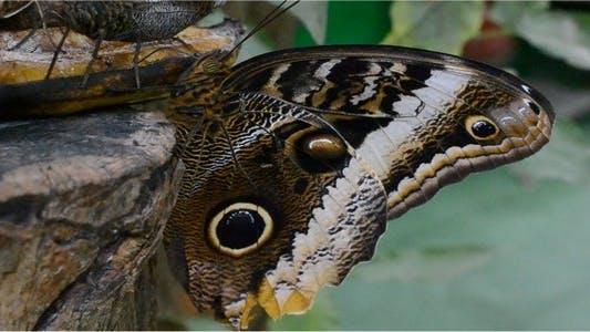 Thumbnail for Butterflies 36