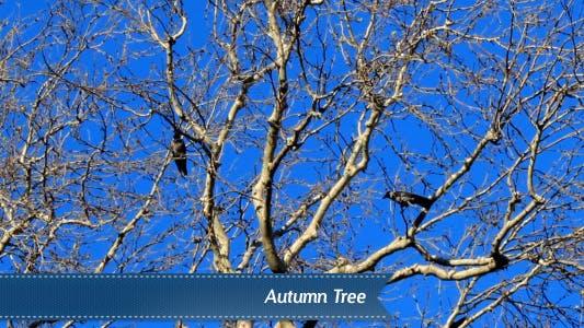Thumbnail for Autumn Tree