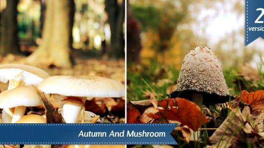 Thumbnail for Mushroom