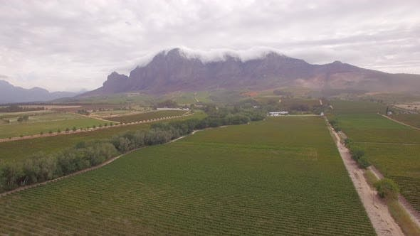 Thumbnail for Aerial travel drone view of a dirt road and grape vineyard farms in South Africa.