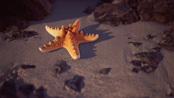 Thumbnail for Starfish on Sandy Beach at Sunset