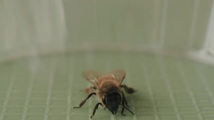 A bee moving its antennas