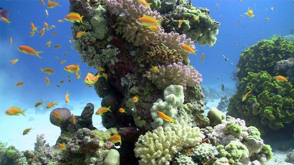 Thumbnail for Colorful Fish On Vibrant Coral Reef, Static Scene 4