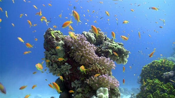 Thumbnail for Colorful Fish On Vibrant Coral Reef, Static Scene 5
