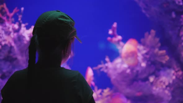 Thumbnail for The Girl Admires the Beautiful Sea Aquarium, the Rear View