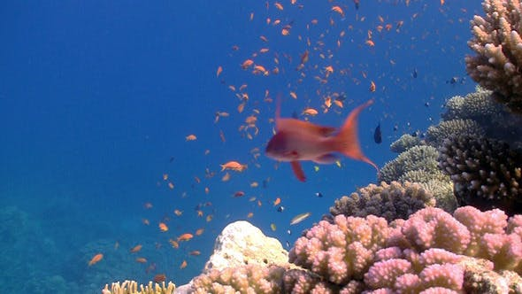 Thumbnail for Colorful Fish On Vibrant Coral Reef 10