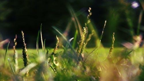 Verschwommenes Gras