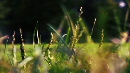 Thumbnail for Blurred Grass