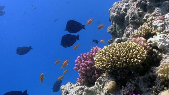 Thumbnail for Colorful Fish on Vibrant Coral Reef 6
