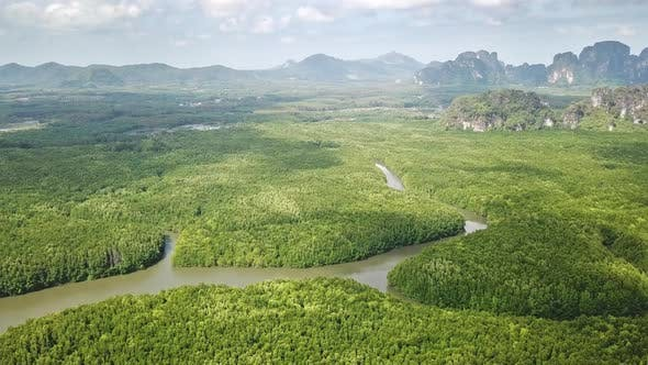 Thumbnail for Flying Over River in Mangrove Forest in Thailand