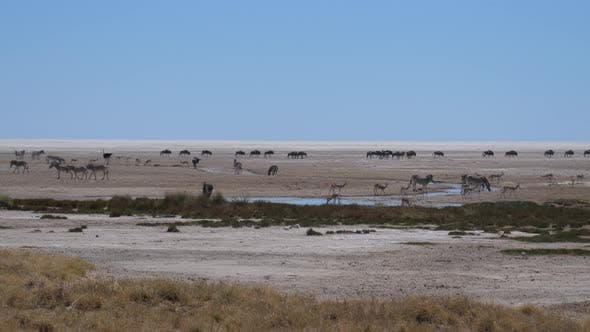 Thumbnail for Herd of Zebra, wildebeest and antelope on a dry savanna