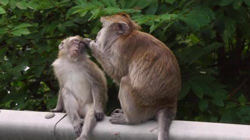 Monkey Parent Cleaning Baby