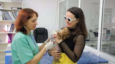 Vet Listens to Yorkshire Terrier with Stethoscope