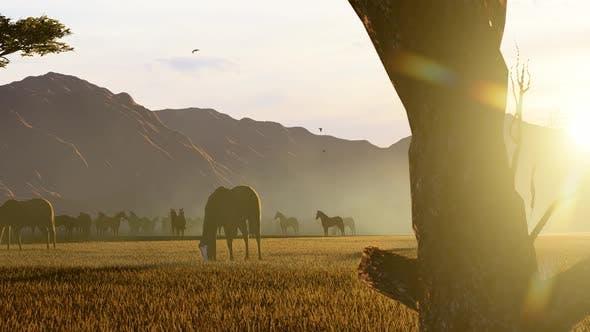 Herd of Wild Wild Horses Grazing