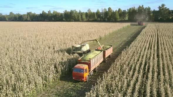 Thumbnail for Forage Harvester Mows Corn and Uploads Into Vehicle