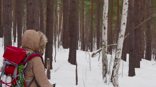 Cover Image for Female Hiker with Backpack Walking in a Winter Foest
