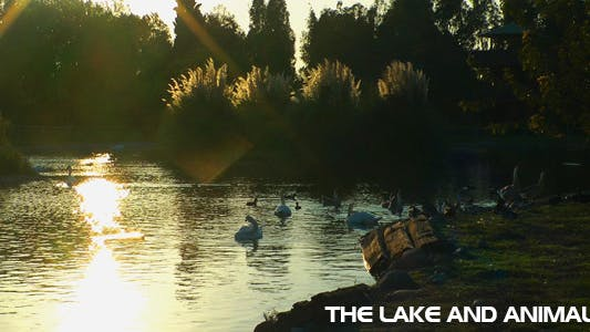 Thumbnail for The Lake And The Animals