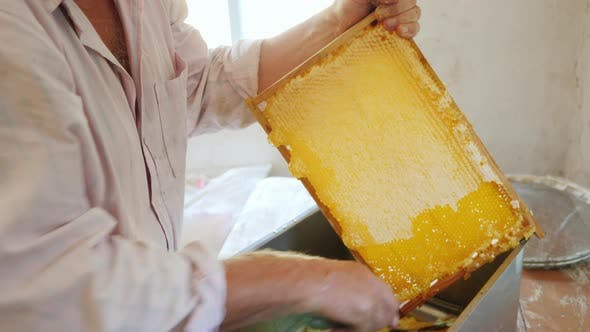 An Elderly Beekeeper Works with Frames for Honey