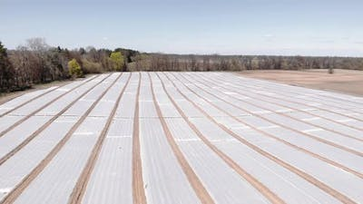 Agriculture field with plastic mulch bed