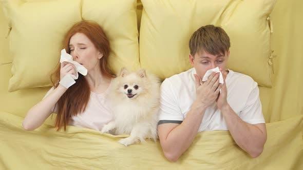 Paar niest und bläst Nase in Serviette, während es mit Hund Haustiere auf dem Bett liegt