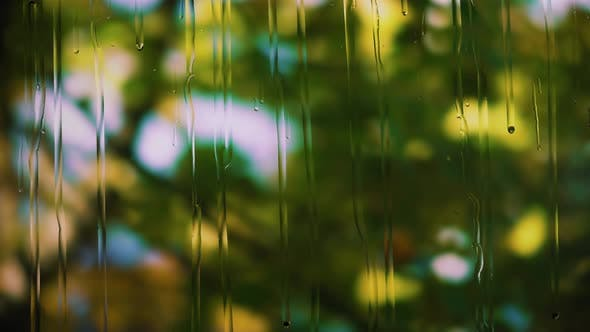 Thumbnail for Drops of Rain Run Down the Glass, the Branches of a Tree with Green Leaves Are Swaying on a Blurry