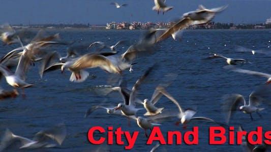 Thumbnail for Stadt und Vögel
