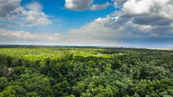 Thumbnail for Hyperlapse Aerial View Over Green Forest with Moving Clouds in Blue Sky