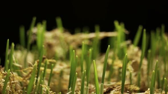 Thumbnail for Wheat Timelapse