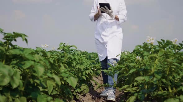 Thumbnail for Female agronomist with tablet computer