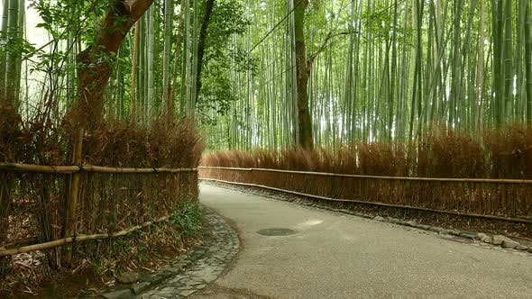 Thumbnail for Bamboo Forest in Kyoto