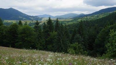 Beautiful Summer Mountain Landscape