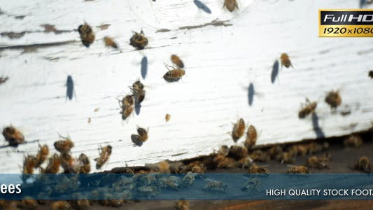 Thumbnail for Bees In The Hive