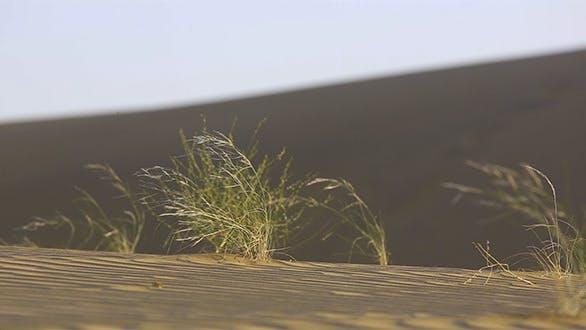 Thumbnail for Dunes Of Thar Desert