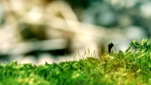 Thumbnail for Moss In Spring Forest Shot With Slider 2