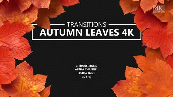 Thumbnail for Herbstlaub Übergänge
